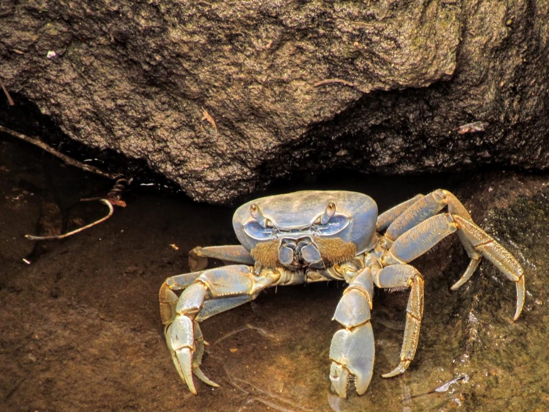 Pesquisadores da Universidade Federal de Uberlândia ajudam a avaliar riscos de extinção de crustáceos na Bacia do Rio Doce