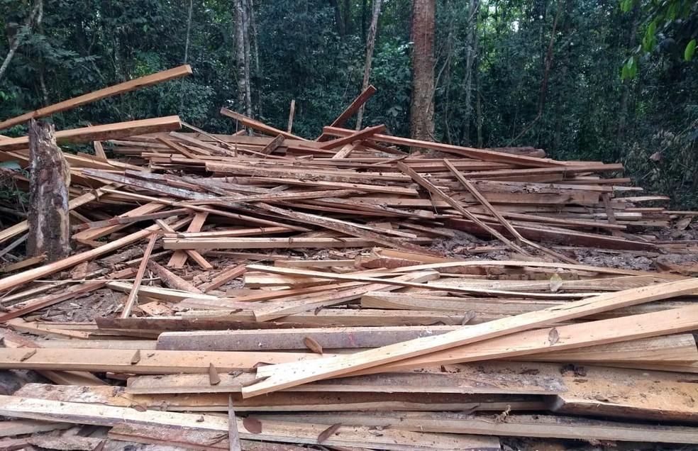 PF encontra madeira processada dentro de reserva pela serraria portátil  — Foto: PF/Divulgação