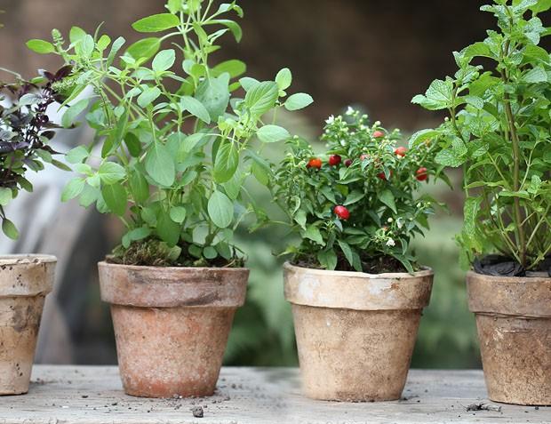 Horta em vasos: dicas e inspirações (Foto: Vamos Receber)