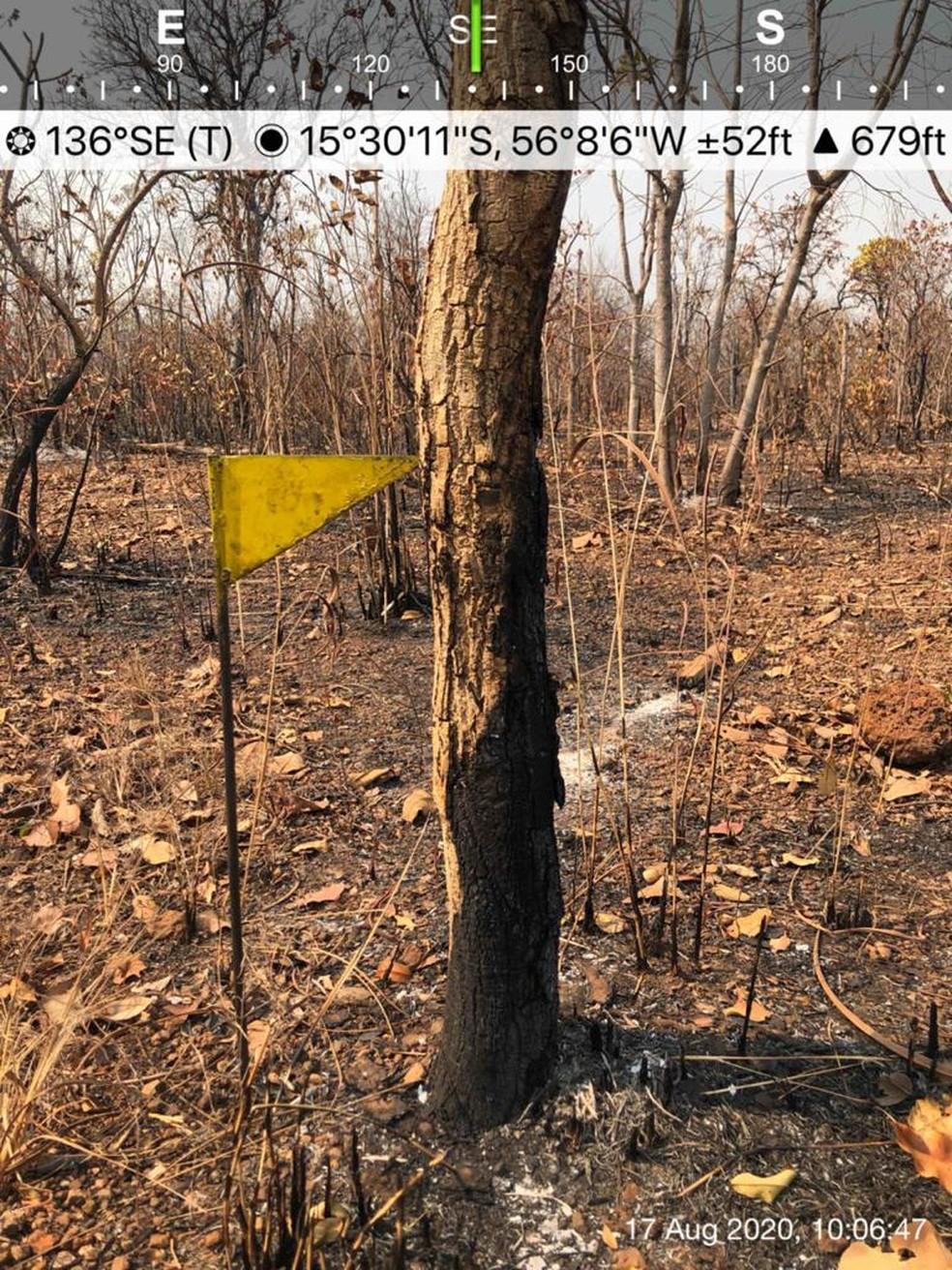 Perícia é feita em incêndios no Pantanal de MT ? Foto: Christiano Antonucci