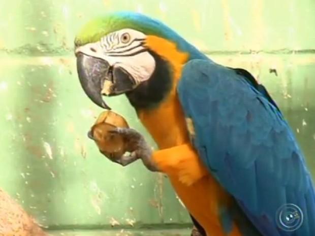 Segundo tratadores, a comida deve aproximar o animal da vida natural (Fot Reprodução/TV TEM)