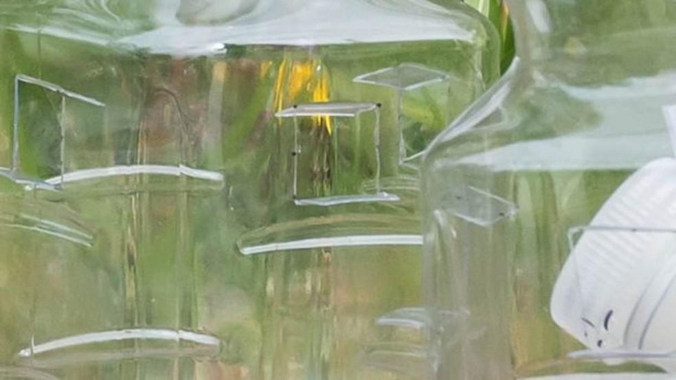 Armadilhas estão sendo espalhadas pelas regiões em que 'vespas assassinas' apareceram — Foto: WASHINGTON STATE DEPARTMENT OF AGRICULTURE via BBC