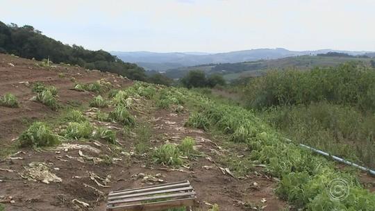 Agricultor de Piedade calcula prejuízo de R$ 60 mil após chuva que destruiu plantações
