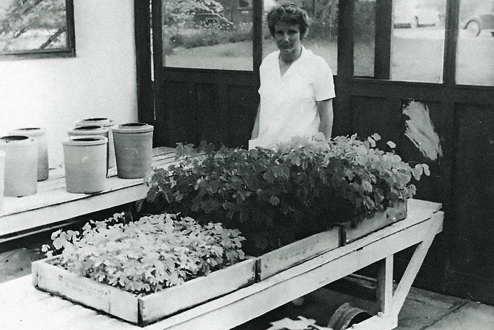 Johanna Döbereiner no laboratório da Embrapa. — Foto: Divulgação