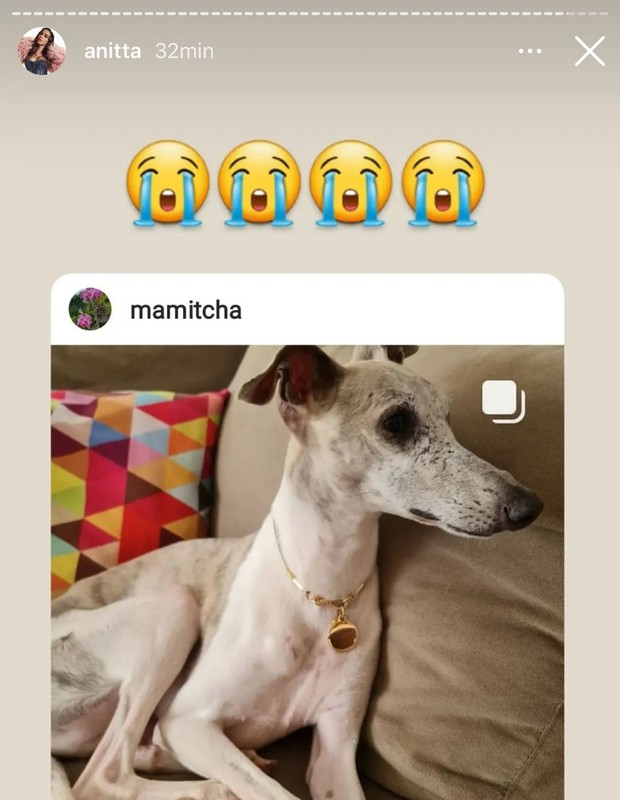 Anitta lamenta morte de cachorro (Foto: Reprodução/Instagram)