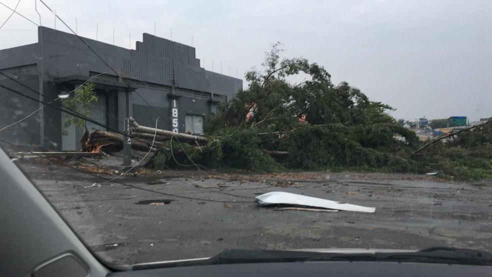 Pedaços da árvore atingiram um galpão em Divinópolis  — Foto: Maria Pereira/Arquivo pessoal