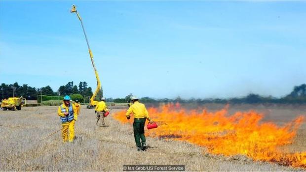 O Serviço Florestal dos EUA toma precauções especiais para garantir que os testes com fogo não fujam do controle (Foto: Ian Grob/US Forest Service via BBC)