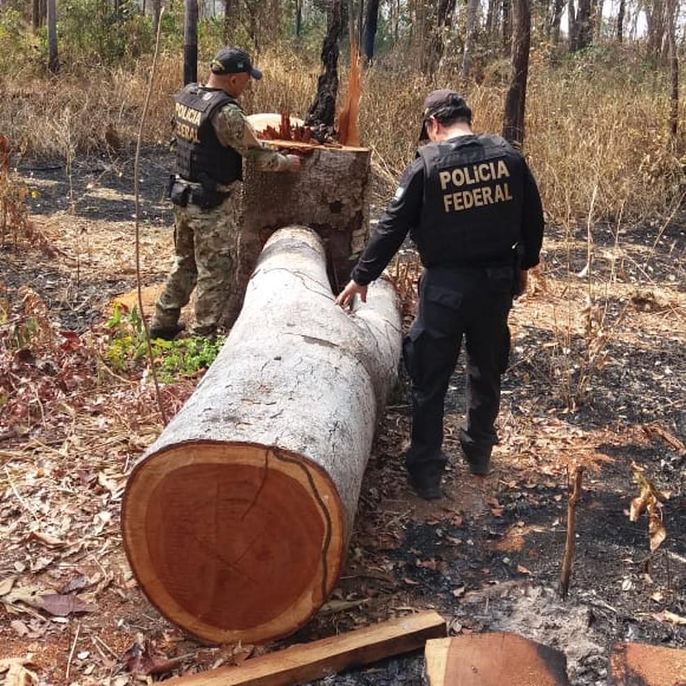 Árvores tinham sido derrubadas  — Foto: PF/ Divulgação