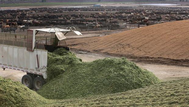 Rancho no Colorado foi um dos investimentos da JBS no exterior (Foto: Getty Images)