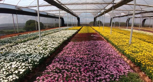 Após colapso na pandemia, setor de flores projeta aumento nas vendas no Dia de Finados