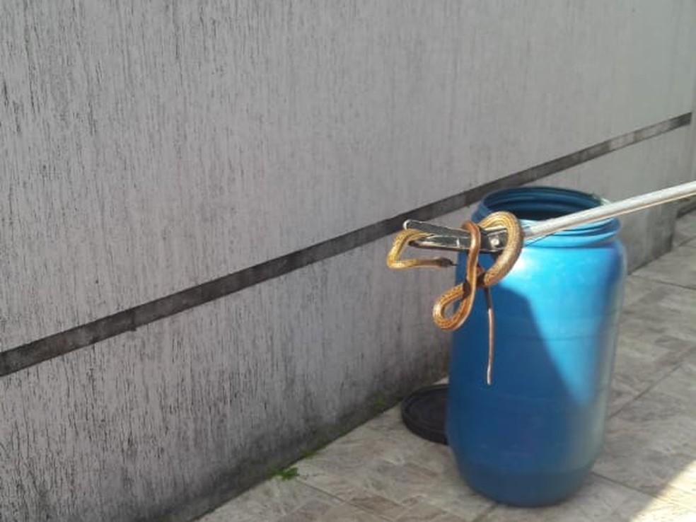 Cobra encontrada em casa em Nova Parnamirim — Foto: Divulgação