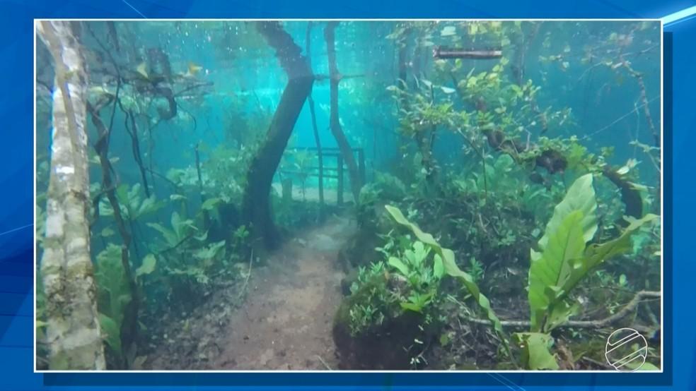 Local é sempre seco, mas após chuva intensa ficou submersa em água cristalina (Foto: Reprodução/TV Morena)
