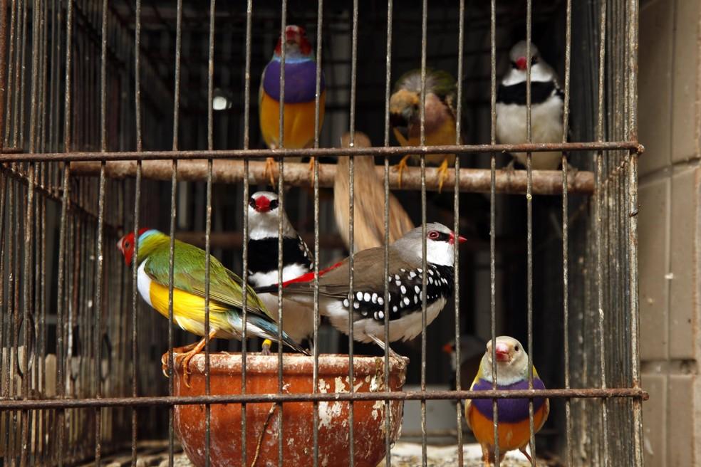 Aves encontradas em situação de maus tratos em Santos (SP) — Foto: Prefeitura de Santos/Divulgação