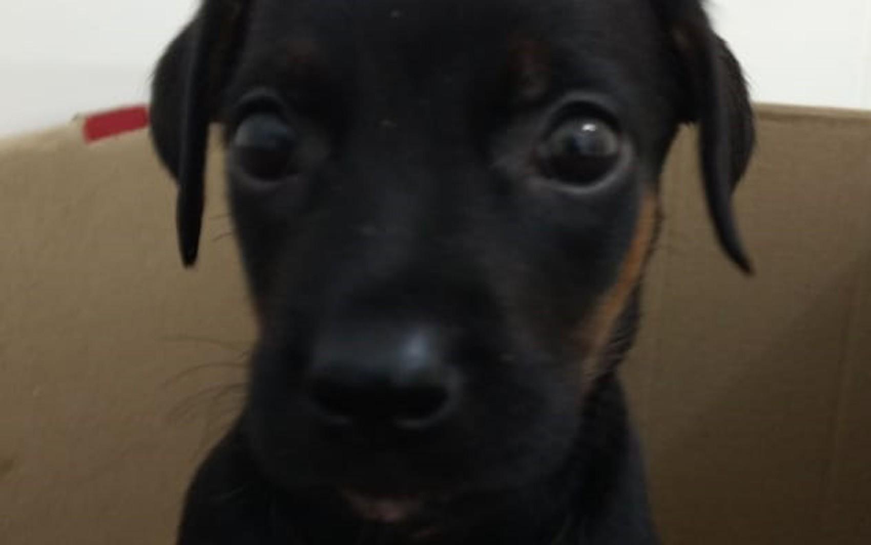 Veterinários acreditam que cachorrinha jogada de prédio na Bahia sobreviveu após ter queda amortecida por carro: 'Milagre'