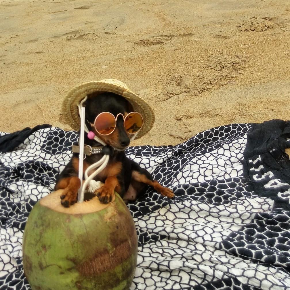 Minimi passa férias no litoral do Espírito Santo.  — Foto: Adna Rocha/Arquivo pessoal