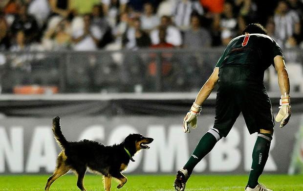 Ricardo berna náutico botafogo cachorro são Januário Série A (Foto: Dhavid Normando / Futura Press)