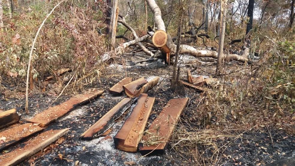 Terra indígena está sendo devastada pelas queimadas e pelo desmatamento — Foto: Ibama/ Divulgação