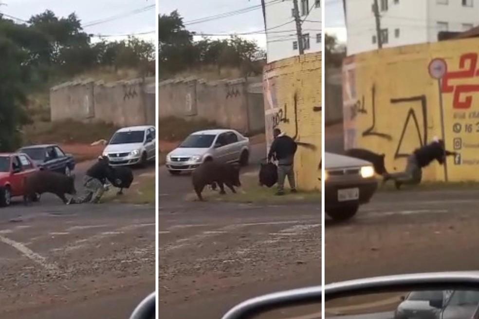 Vídeo mostra momento em que entregador é atacado por porco — Foto: Reprodução