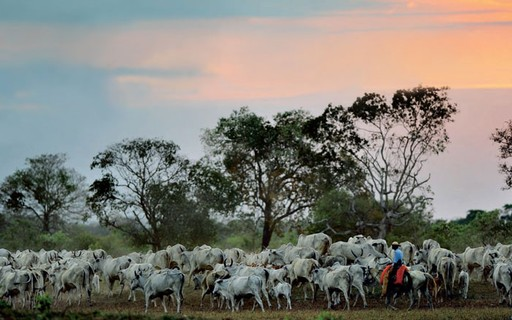 Rastreabilidade de ponta a ponta pode excluir pequenos pecuaristas no Brasil