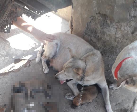 MP denuncia à Justiça acusada de matar filhotes de cachorro por calor extremo em Teresina