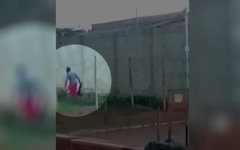 Cachorro é agredido em Trindade, em Goiás — Foto: Reprodução/TV Anhanguera
