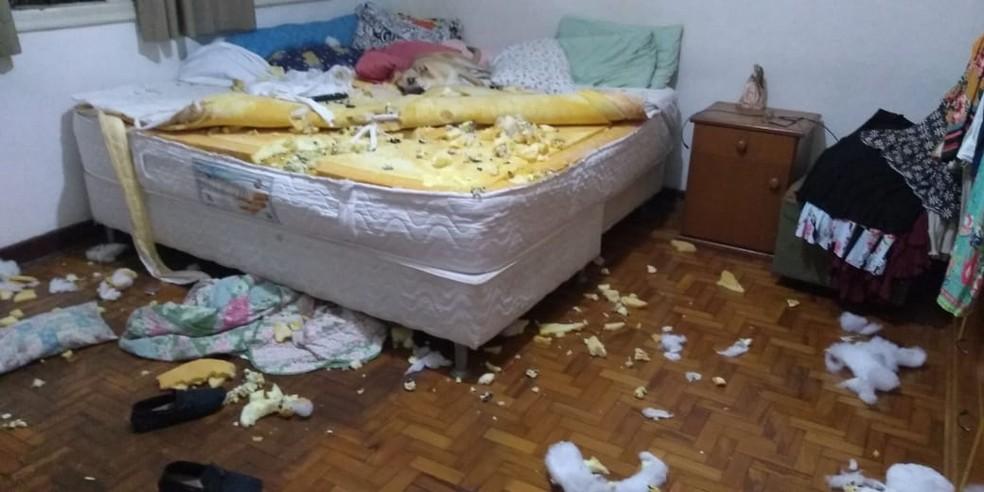 Vira-lata viralizou com destruição de quarto — Foto: Arquivo pessoal