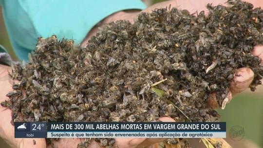 Apicultor perde 300 mil abelhas e suspeita é de efeito de agrotóxicos em Vargem Grande do Sul