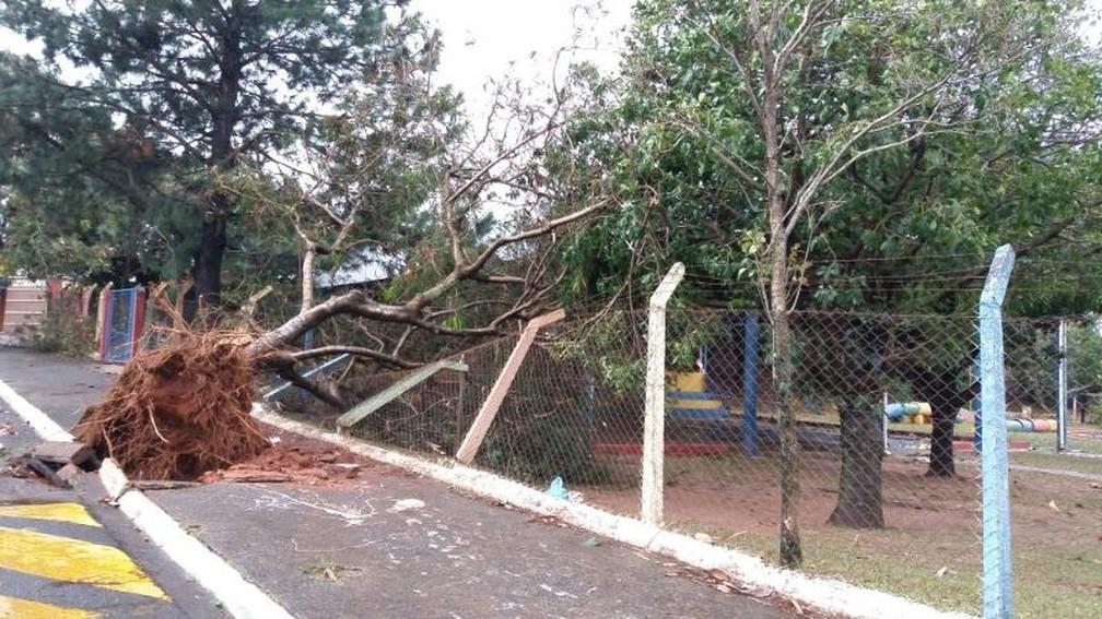 Grade de uma escola infantil na zonal sul ficou danificada com queda de árvore (Foto: Arquivo Pessoal)