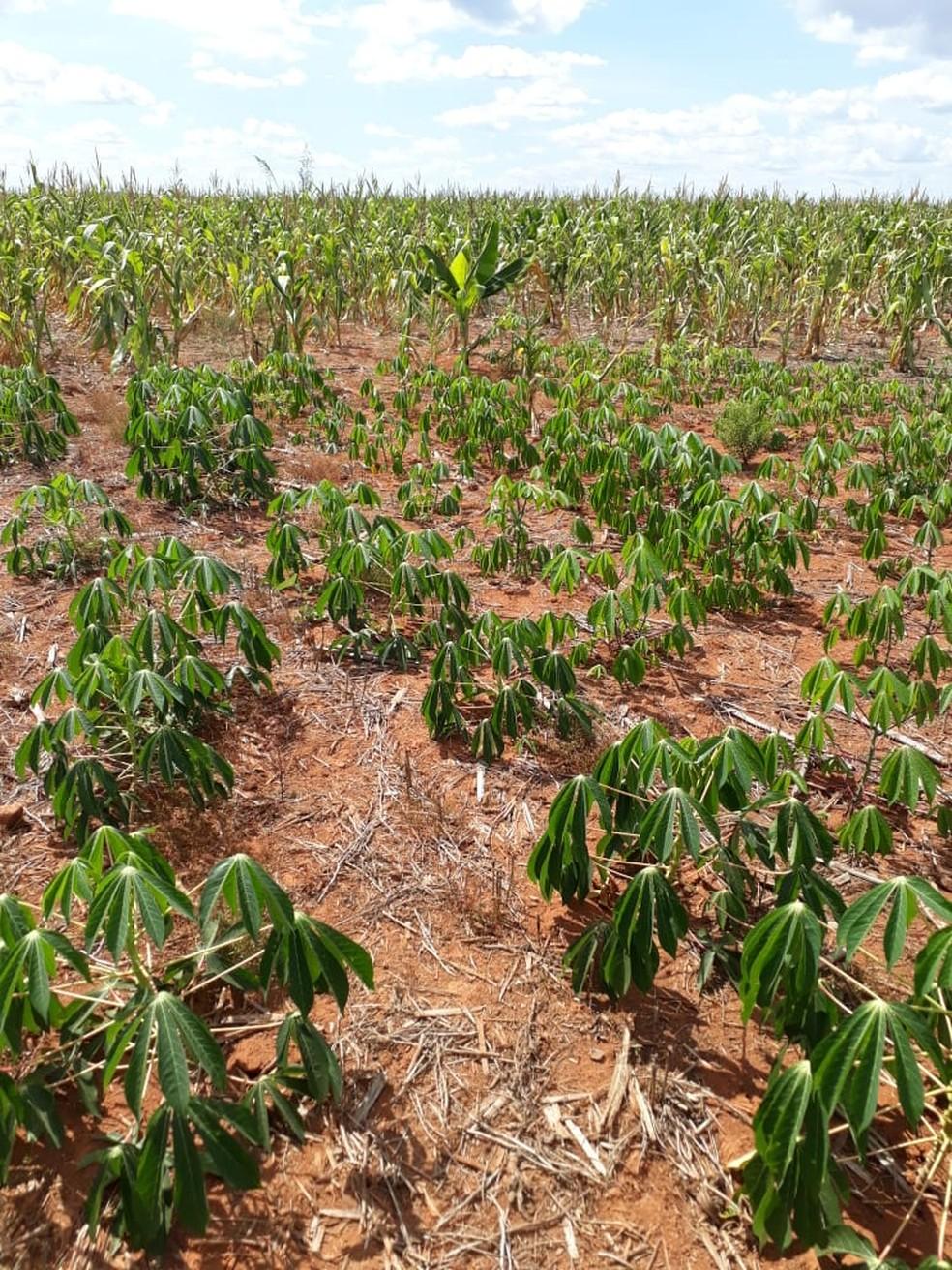 Famílias usam a terra para plantar e sobreviver (Foto: CPT/Divulgação)