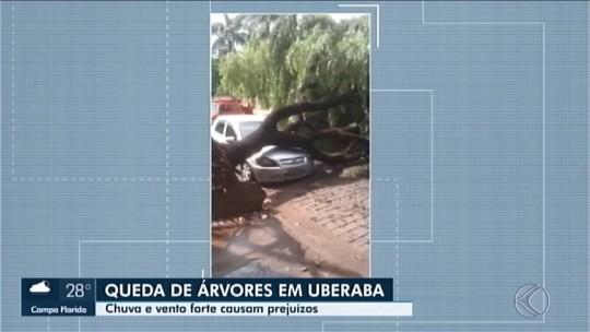 Alagamentos e quedas de árvores são registrados durante forte chuva em Uberaba