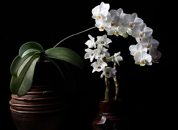 Como preparar as orquídeas para a chegada da primavera (Foto: Sergio Oyama Junior/Divulgação)