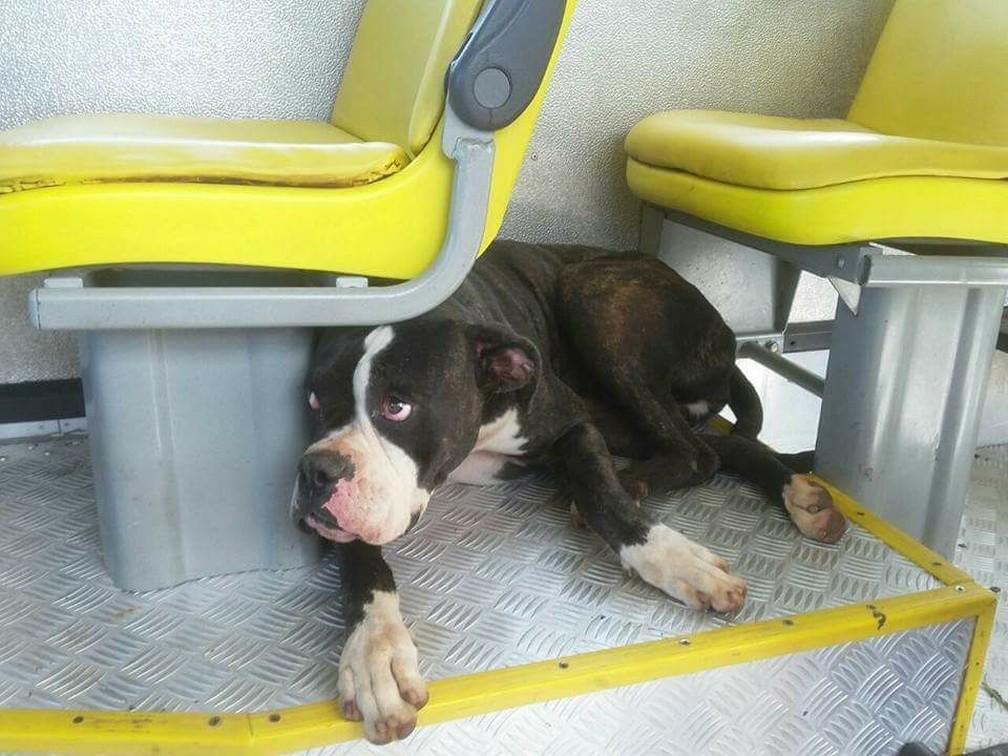 Cachorrinha apenas deitou embaixo de um dos assentos e se recusou a sair (Foto: Corpo de Bombeiros)