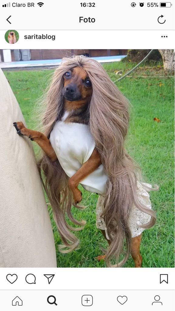 No AM, cadela blogueira faz sucesso com 'looks do dia' e reúne mais de 4 mil seguidores na internet