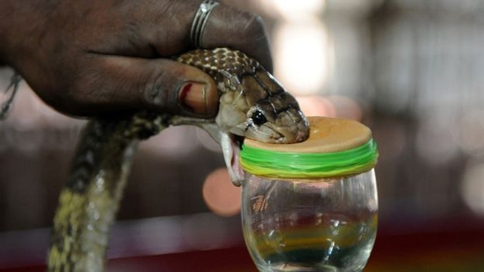Sesap orienta para cuidados com animais peçonhentos — Foto: Swaminathan Natarajan/BBC
