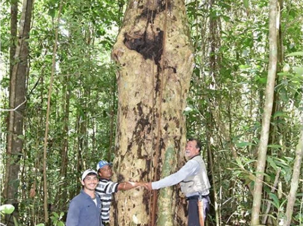Ávore encontrada em Alagoas é antiga e está em área de difícil acesso — Foto: IMA/Divulgação