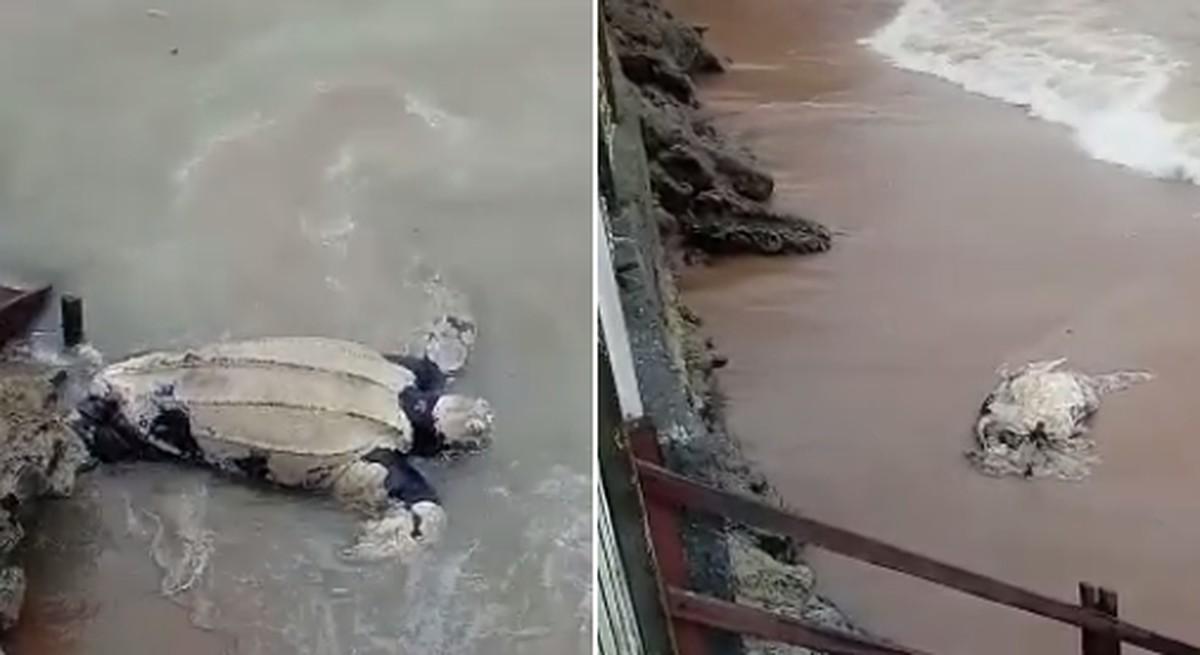 Duas tartarugas são encontradas mortas em praia de Rio das Ostras, no RJ - G1
