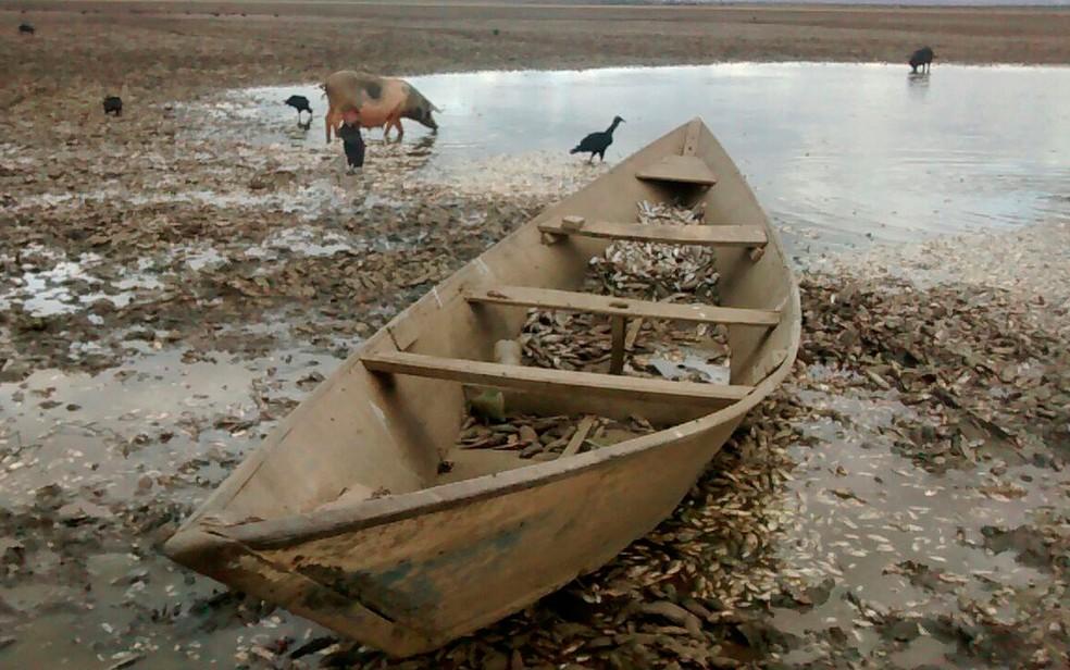 Milhares de peixes morreram após lagoa secar no oeste da Bahia (Foto: Secretaria do Meio Ambiente/ Divulgação)