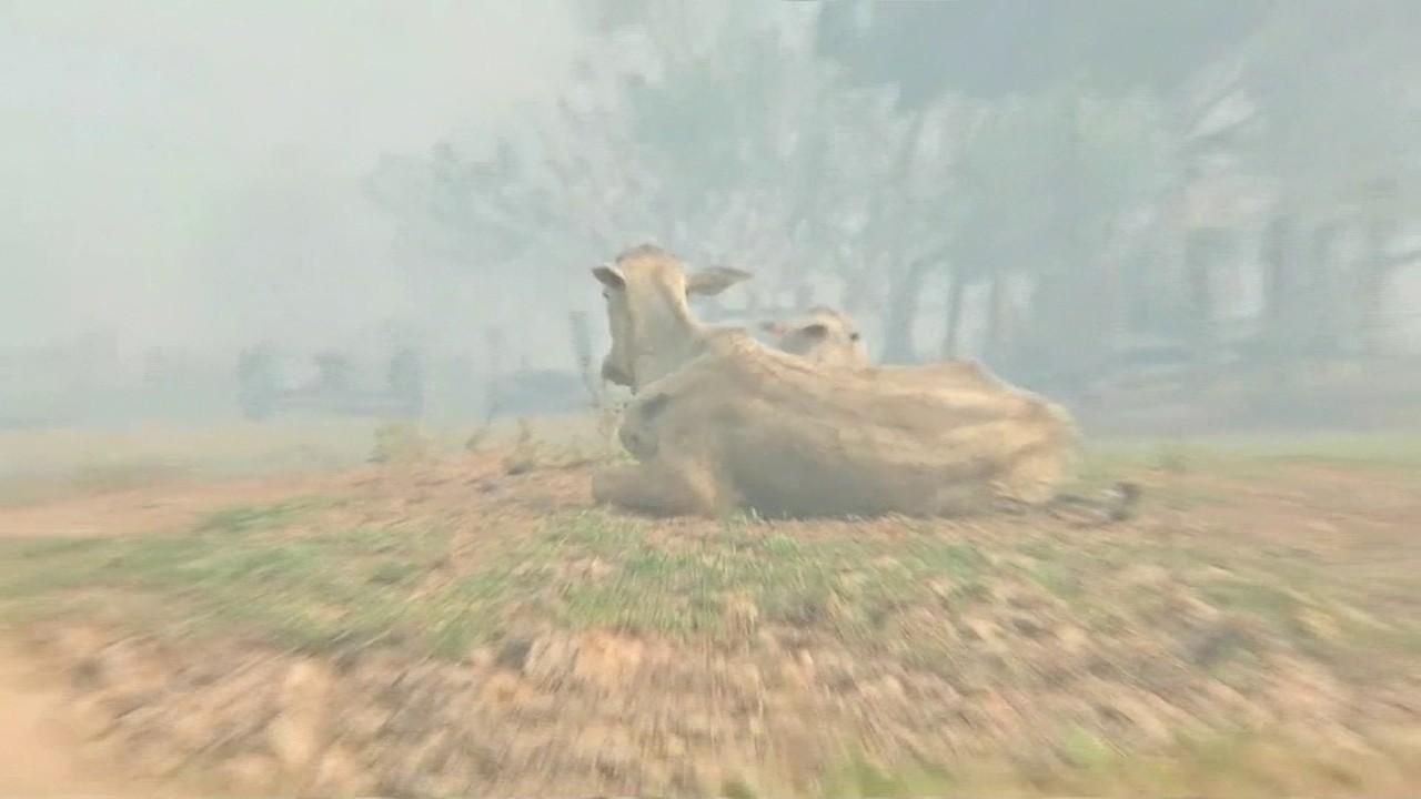 Mesmo com chuva, incêndios ainda preocupam no Pantanal