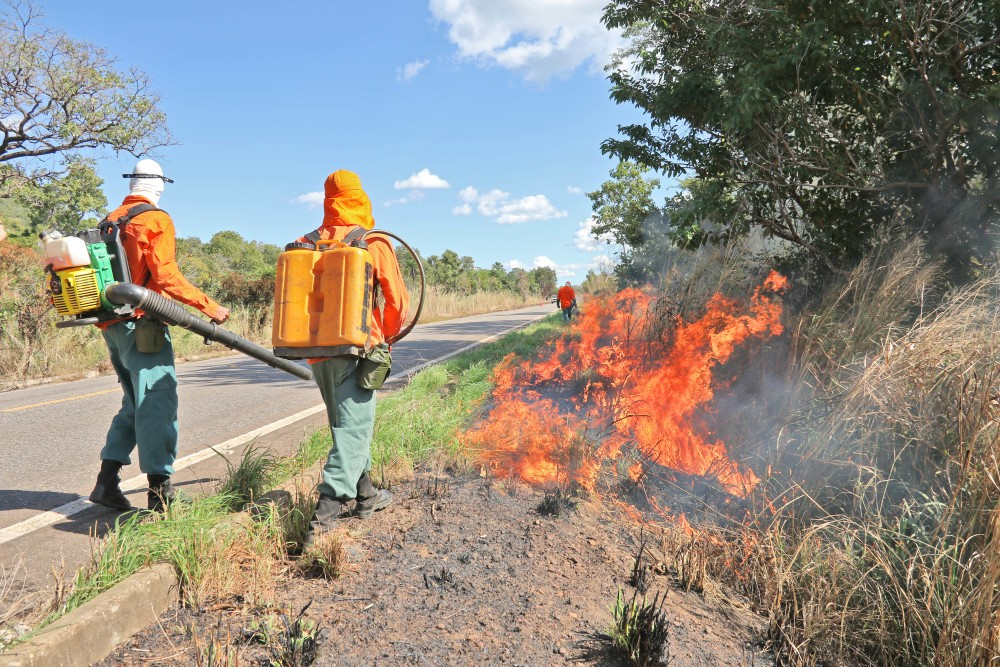 Equipes farão queimas controladas em margens de rodovias para evitar incêndios florestais
