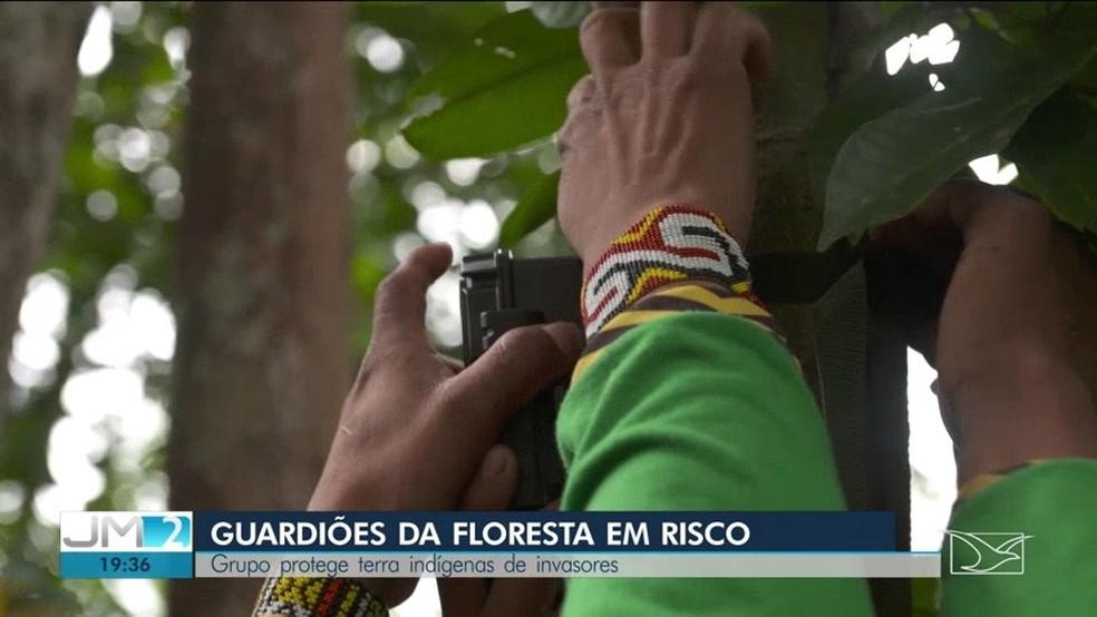 Índios Kaapor instalam câmeras pela floresta no intuito de encontrar possíveis madeireiros nas terras indígenas — Foto: Reprodução/TV Mirante