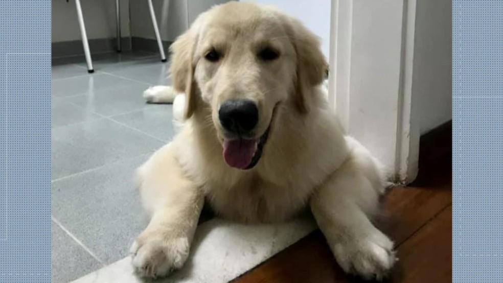 Família tenta recuperar a cadela Mel, de um ano e meio de idade, que foi levada em um assalto no domingo (25) à noite — Foto: Reprodução/ Redes sociais