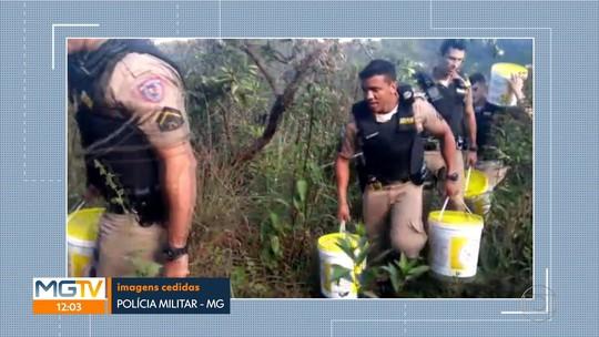 Polícia apreende grande quantidade de maconha em BH e na Região Metropolitana