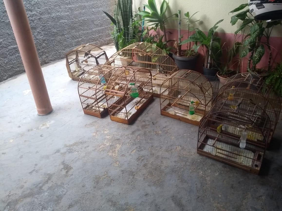 Morador de Sorocaba é multado por manter aves silvestres em gaiolas