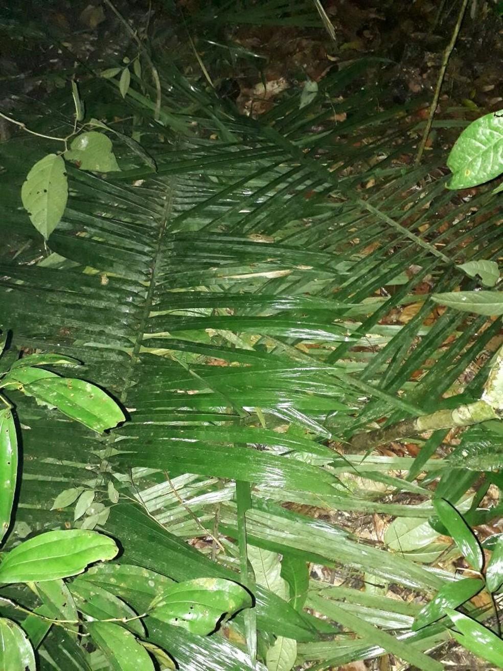 Crianças fizeram cama usando folhas de coqueiro e dormiram na mata (Foto: Polícia Militar de Mato Grosso)