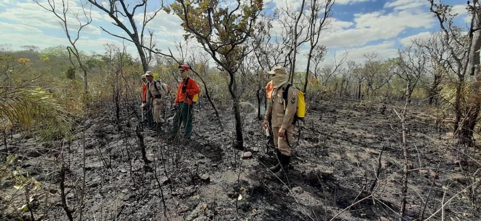Fogo atingiu área de preservação em Palmas — Foto: Divulgação/Naturatins