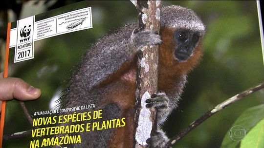 Em dois anos, cientistas descobrem mais de 300 espécies na Amazônia