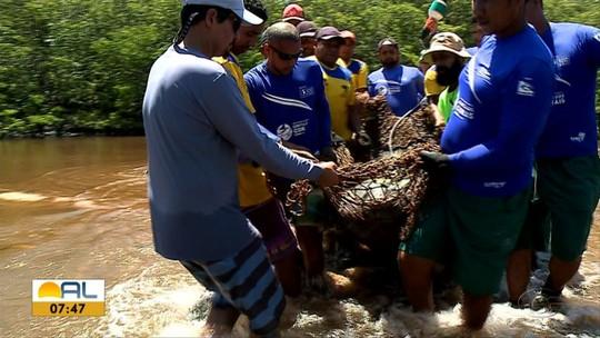 Três peixes-boi são soltos no Rio Tatuamunha, Porto de Pedras, AL