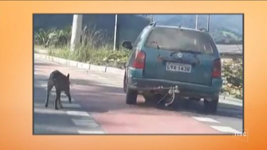 Cachorro é amarrado a para-choque e forçado a acompanhar carro em rodovia de SC; vídeo