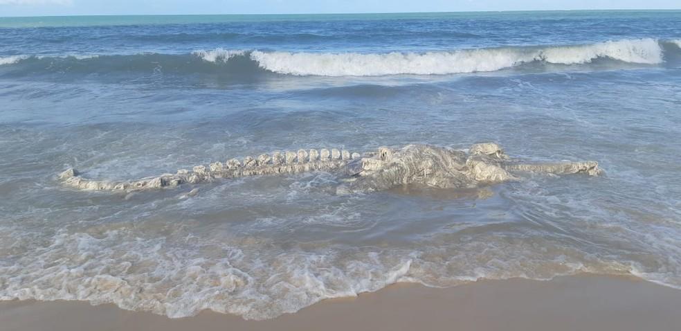 Carcaça foi encontrada na praia de Muriú, no litoral Norte — Foto: Divulgação