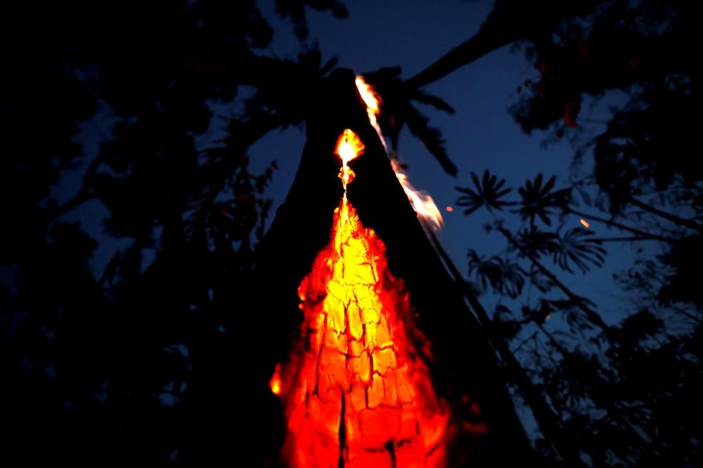 Foto feita em 11 de setembro de 2019 mostra tronco de árvore em chamas durante incêndio em Itapua do Oeste, em Rondônia, na Amazônia. — Foto: Bruno Kelly/Reuters